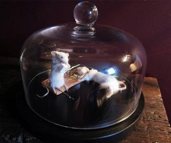 Vintage-inspired taxidermy wins ad industry's fine art prize