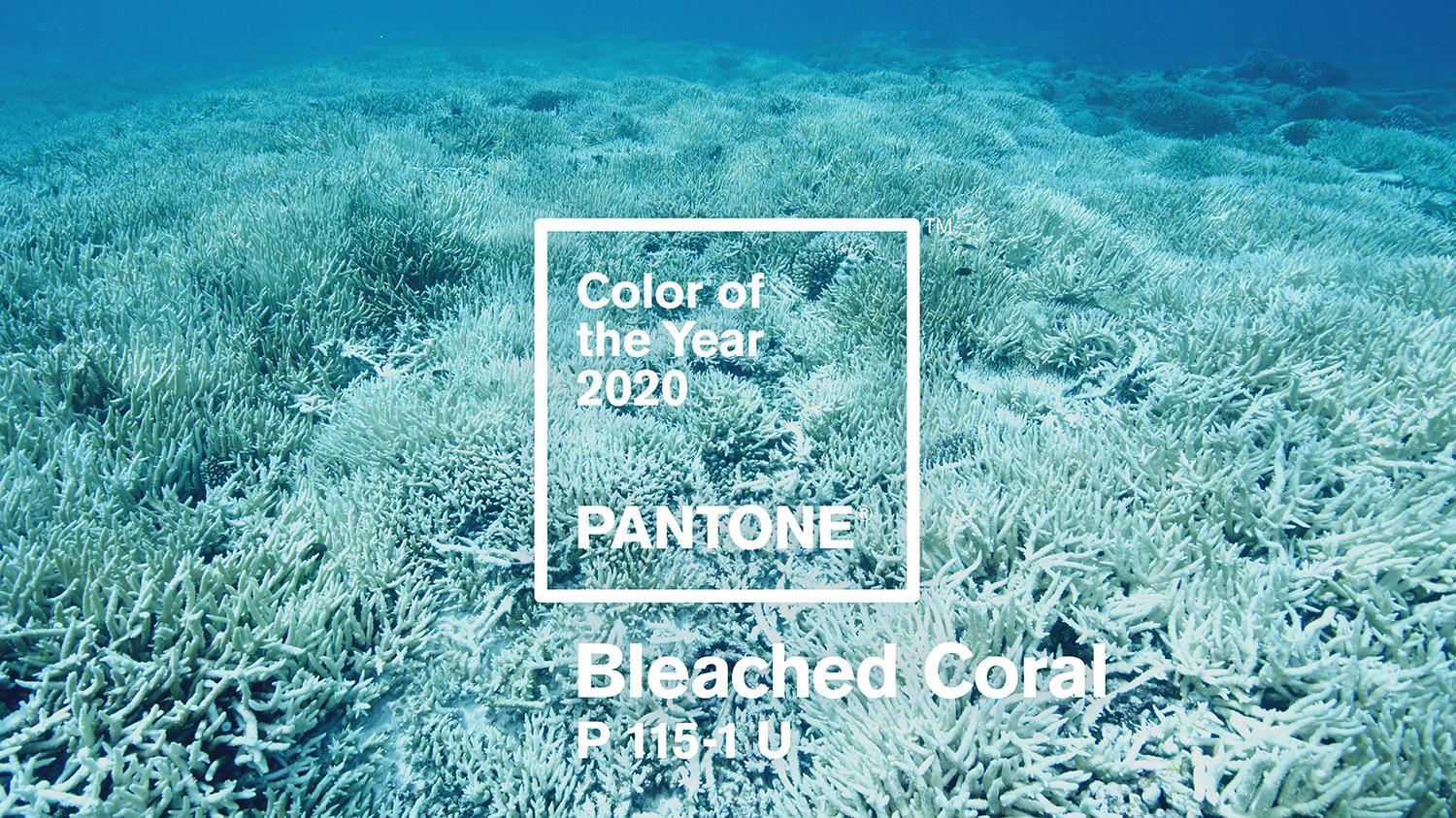 Pantone Colour of the Year 2020 is already here - News ...