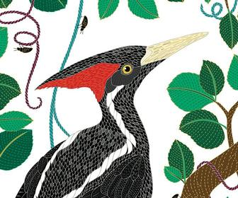 Colouring book star Millie Marotta on bringing colour to an animal world before it's too late