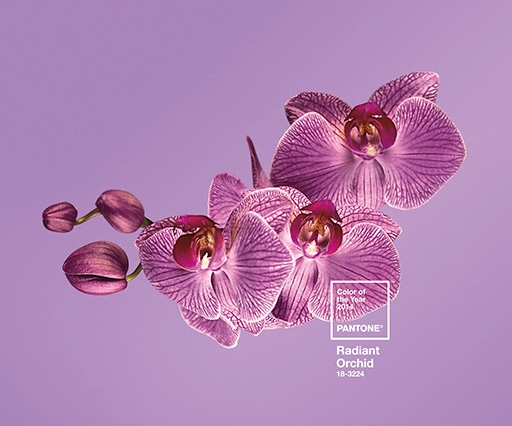 Pantone's Colour of the Year 2014 is a rosy pink