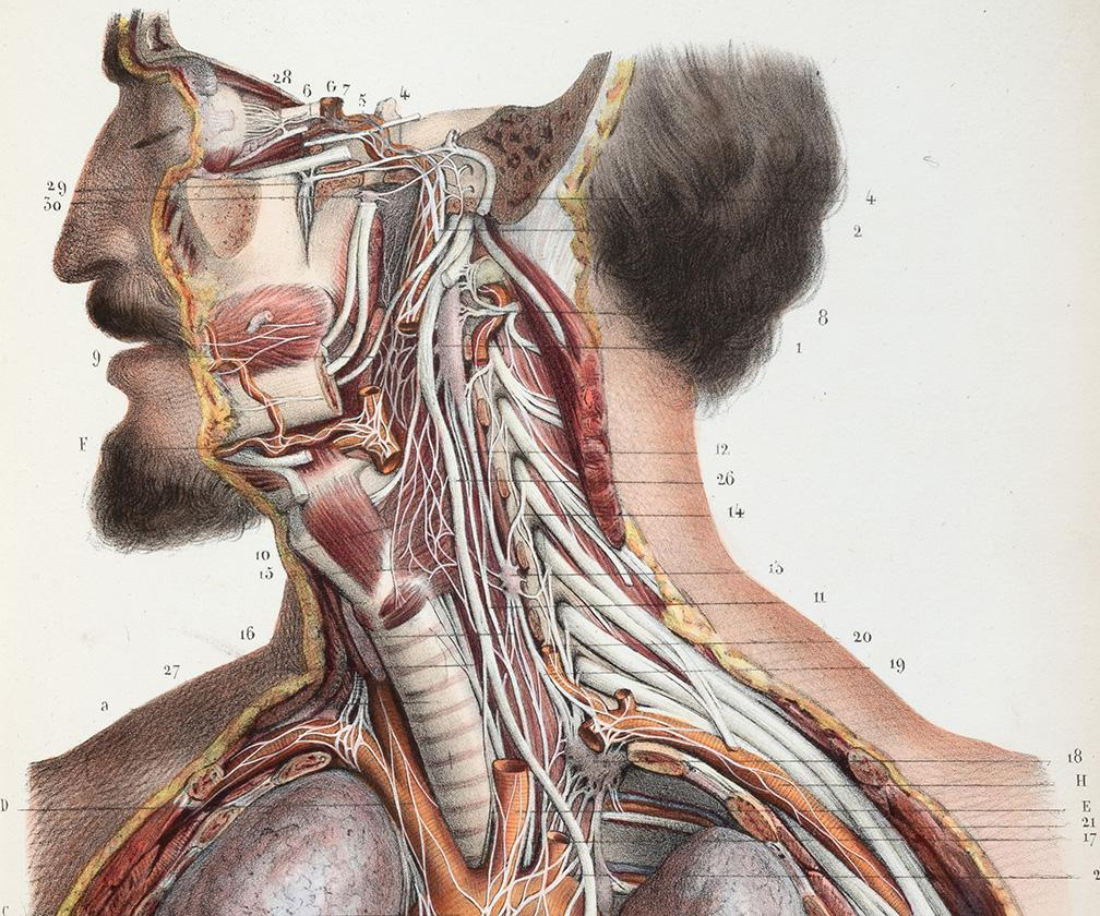 These rare medical illustrations detail how we've viewed the workings of the human body from medieval times until today